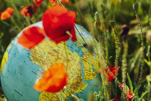 Close-up of globe amidst red poppy flowers on field - MJ02388