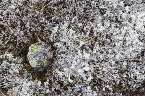 Vegetation with hoar frost - RUEF02256