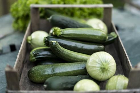 Zucchinis in wooden box - MAUF02702
