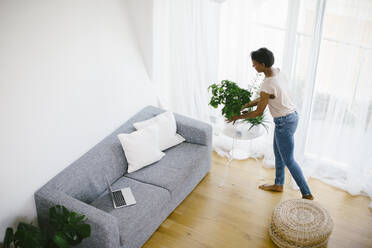 Woman arranging plant at home with laptop on couch - SODF00027