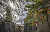 Trees and historical buildings - BLEF10599