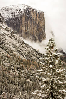 Snowy treetops and mountain in Yosemite National Park, California, United States - BLEF10635