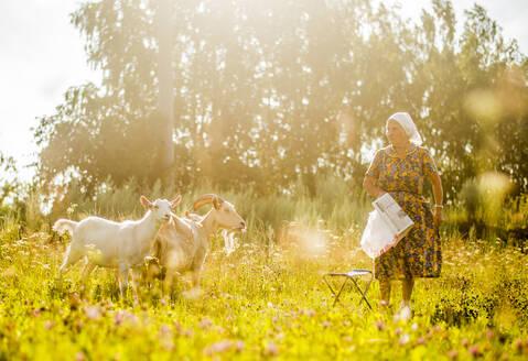 Caucasian woman tending goats in field - BLEF10912