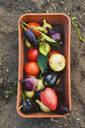 Bucket of vegetables in garden - BLEF11368