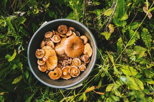 Bucket of mushrooms in grass - BLEF11380