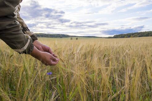 Arms of Mari man examining plants in rural field - BLEF11791