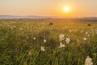 Tall grass growing in rural field at sunset - BLEF11806