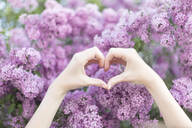 Hands of a young woman in heart shape in front of a lilac shrub - JESF00241