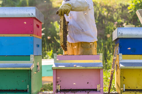 Beekeeper checking frame with honeybees - MGIF00592