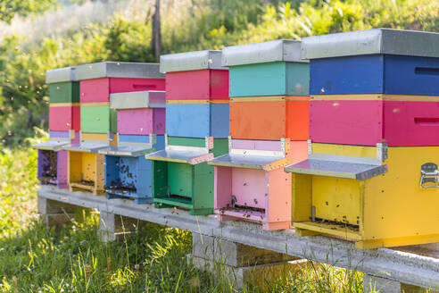 Colorful beehives and honeybees - MGIF00598