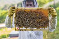 Beekeeper checking frame with honeybees - MGIF00601