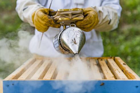Italy, Tuscany, Arezzo, Beekeeper - MGIF00604