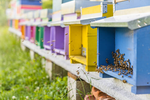 Colorful beehives and honeybees - MGIF00607