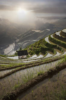 Rice paddy hills in remote landscape - BLEF11965