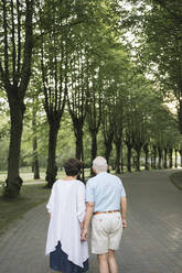 Back view of senior couple strolling hand in hand in a park - AHSF00692