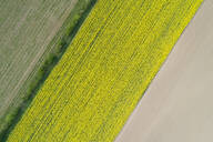 Abstract aerial view of agricultural fields, rape field, Franconia, Bavaria, Germany. - RUEF02272