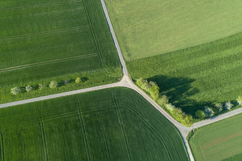Aerial view of treelined road with intesection through agricultural fields, Franconia, Bavaria, Germany - RUEF02281