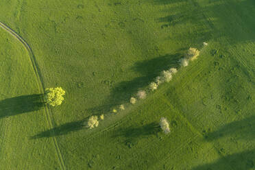 Aerial view of tree, a row of trees and dirt road through meadow, Bavaria, Germany - RUEF02284