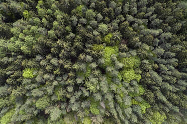 Aerial view of road through forest, springtime, Steigerwald, Franconia, Bavaria, Germany - RUEF02287