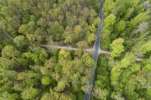 Aerial view of road through forest, springtime, Steigerwald, Franconia, Bavaria, Germany - RUEF02296