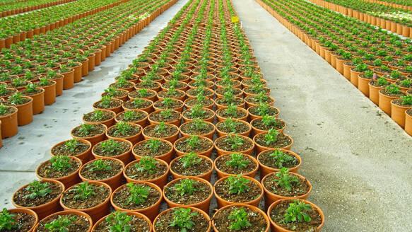 Seedlings growing in pots by dirt roads - BLEF12121