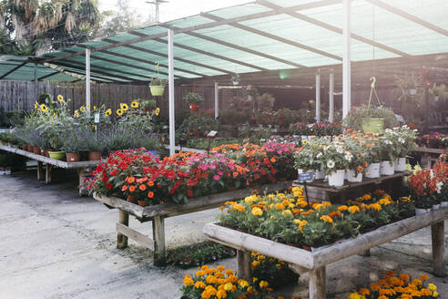 Assortment of flowers in a garden center - JRFF03503