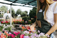 Close-up of female worker in a garden center caring for flowers - JRFF03521
