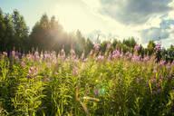 Flowers growing in rural field - BLEF12658
