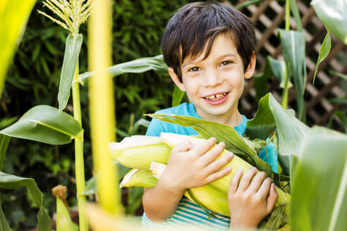 Mixed race boy picking corn in garden - BLEF12766