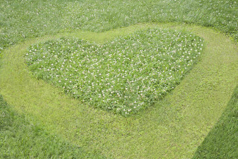 High angle view of heart mowed in grass lawn - BLEF12925