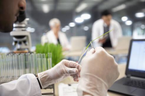 Close up male environmental scientist placing stem in test tube - HEROF37363