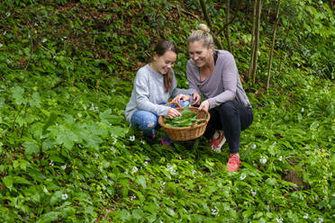 Mother and daughter picking wild garlic - LBF02647