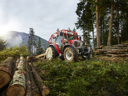 Tractor tugging tree trunks in a forest, Kolsass, Tyrol, Austria - CVF01431