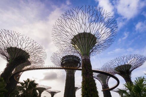 Gardens by the Bay with Supertree Grove and skywalk, Singapore - HSI00736