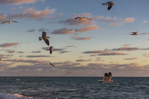 Seagulls flying over sea at Miami against sky during sunrise, Florida, USA - MABF00542