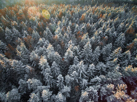 Aerial view of snowy forest during winter in Estonia - AAEF00885
