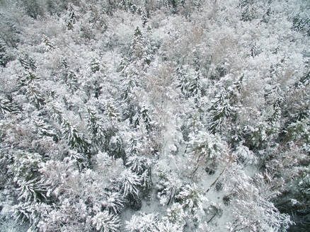 Aerial view of snowy forest in Estonia. - AAEF00897