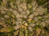 Aerial view of colorful forest in Estonia - AAEF01026