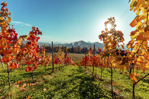 Scenic view of vineyard with mountains in background against blue sky during sunny day, Austria - DAWF00950