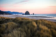 Tall grass under sunset sky on Cannon Beach, Oregon, United States - BLEF14353