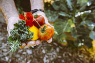 Close up of hands holding fresh produce in garden - BLEF14596