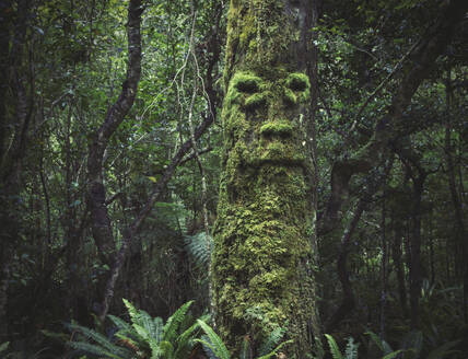 Face growing in moss on tree in lush forest - BLEF14635