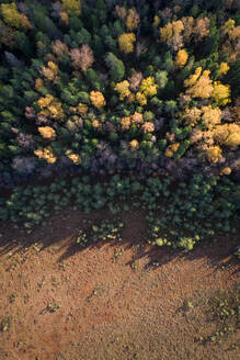 Aerial view of colorful forest in Marimetsa natural reserve in Estonia - AAEF02075