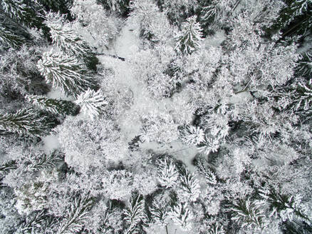 Aerial view of snowy forest in Estonia. - AAEF02129