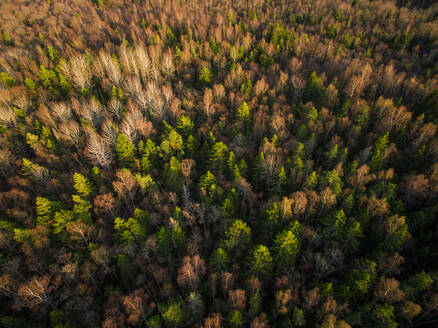 Aerial view of a forest during fall season in Estonia. - AAEF02147