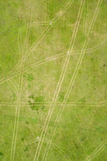 Aerial view of tracks drawing in the lawn in green meadow. - AAEF02222