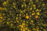 Aerial view of colorful nordic forest at fall in Estonia - AAEF02225