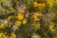 Aerial view of colorful nordic forest at fall in Estonia - AAEF02228