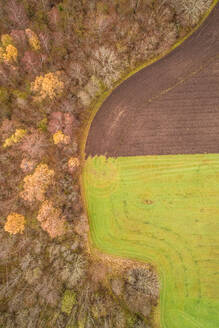Aerial view of a separation between two different colored fields in Estonia. - AAEF02237