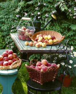 Baskets of fresh peaches on table in garden - PPXF00224